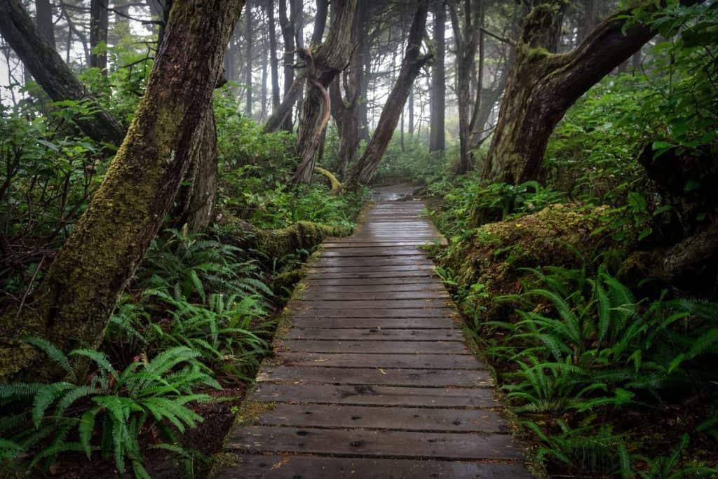 ويست كوست تريل West Coast Trail افضل اماكن الهايكنق في العالم