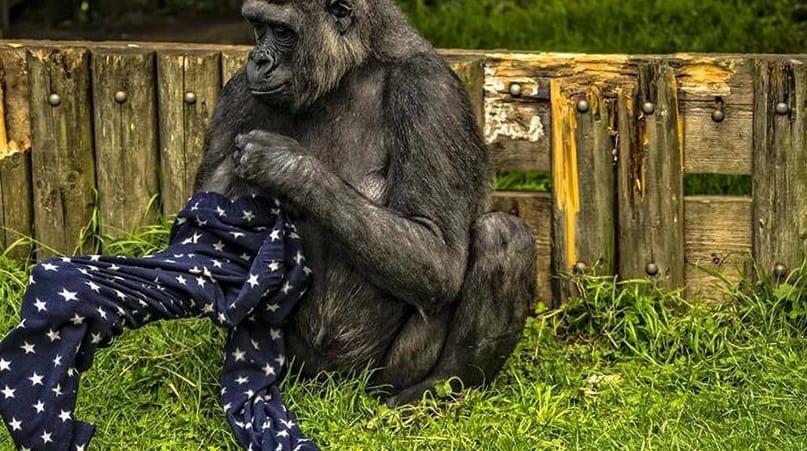 حديقة حيوان بلفاست ، مقاطعة أنتريم Belfast