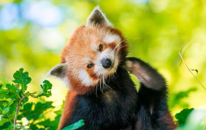 حدائق حيوانات بريستول ، سومرست وبريستول   Bristol Zoo Gardens