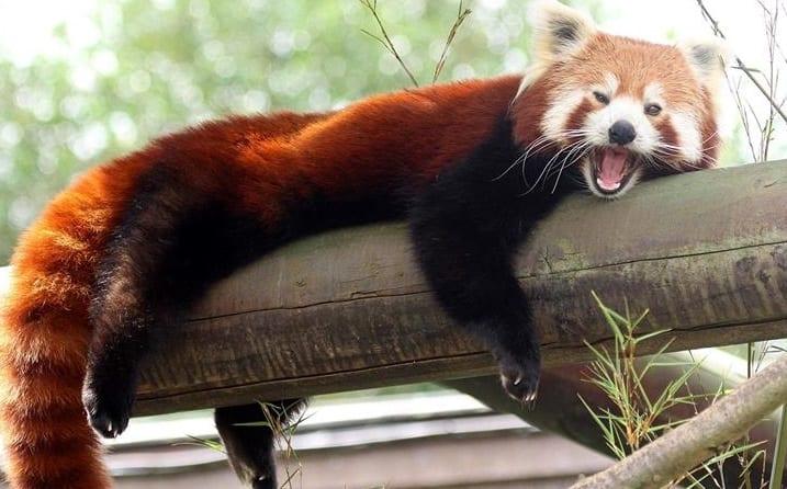 حديقة كولشيستر للحيوانات ، إسيكس  Colchester