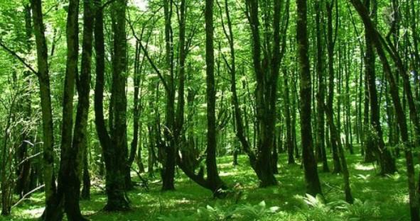 أفضل ريف في أذربيجان أستارا Astara