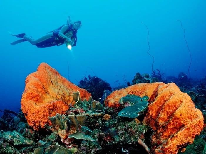 افضل جزر الكاريبي Bonaire بونير