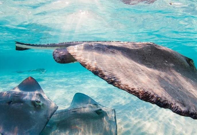 افضل جزر الكاريبي Cayman Islands جزر كايمان